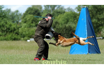 Shield K9 Dog Training in Cambridge: Dog Training Burlington