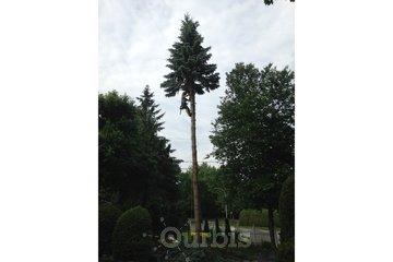 Vert-Tige Arboriculture, Émondage, Abattage d'arbre, Élagage