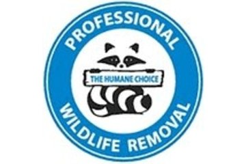 Professional Wildlife Removal
