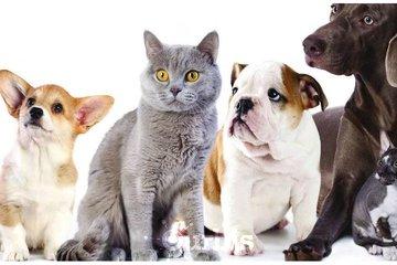 Le Festin Animal Enr à Beaupré: 2