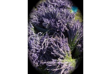 Forest Green Man Lavender