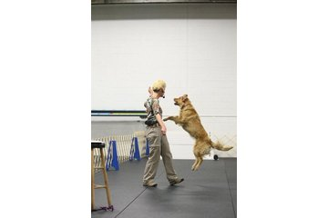 TNT Kennels in Abbotsford: Janice Gunn demonstrating during an obedience workshop