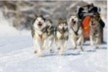 Chambre De Commerce De Ste-Adele in Sainte-Adèle: Traîneau à chiens