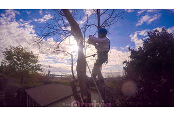 Arboquébec à Longueuil: Démontage d'arbre