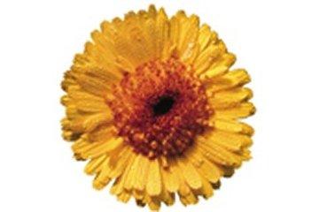 L'Herbothèque à Lantier: L'Herbothèque