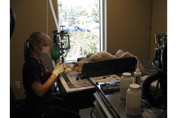 Animal 911 Hôpital Vétérinaire à Roxboro: a dental cleaning/un detartrage