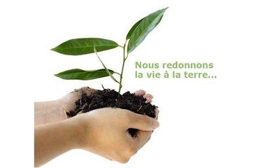 Northex Environnement Inc