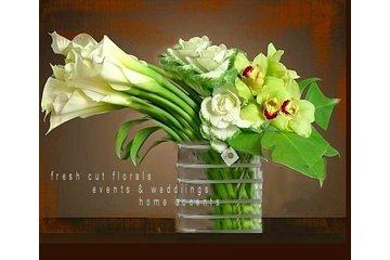 The Chocolate Tulip- Floral Design Studio