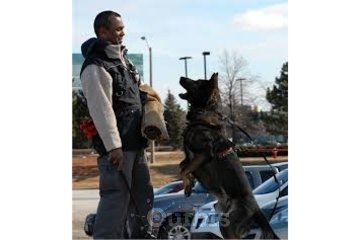 TEAM-K9 Trainers- Dog & Puppy Training Mississauga in Mississauga: Aggressive Dog Training
