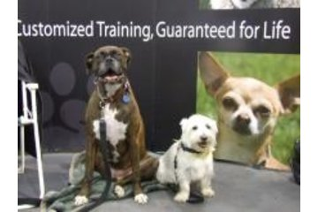 Bark Busters in Home Dog Training