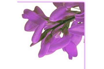 Bromewood Fleuriste