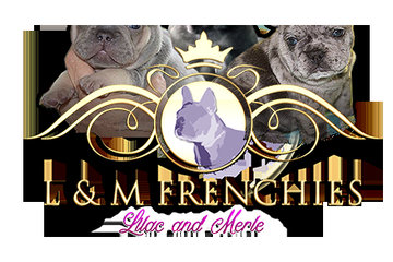 Lilac & Merle Frenchies