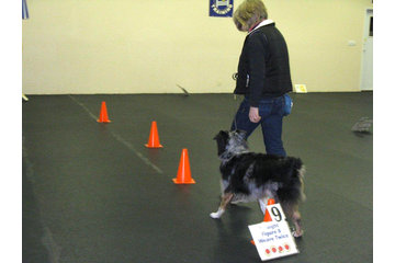 TNT Kennels in Abbotsford: Obedience exercises
