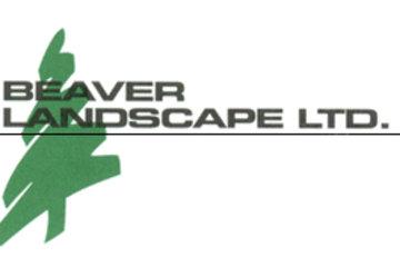 Beaver Landscape