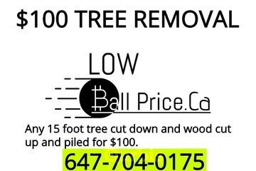 PROFESSIONAL/TREE REMOVAL/TREE CUTTING