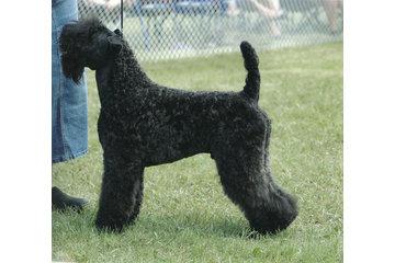 Keriland Pampered Pups in Strathmore