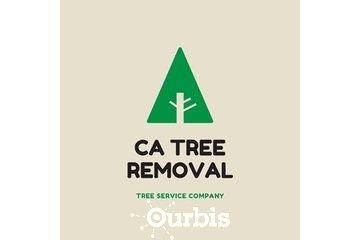 CA Tree Removal of Etobicoke in etobicoke: CA Tree Removal of Etobicoke