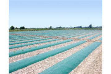 Dubois Agrinovation in Saint-Rémi: green mulch