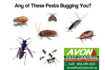 Avon Pest Control Surrey
