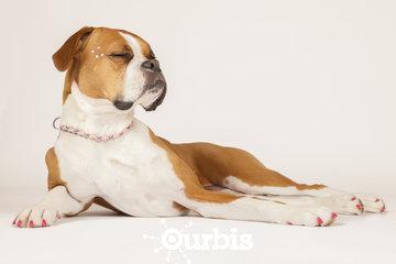 Toilettage Studio Loft Canin