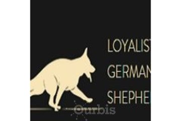 Loyalist Shepherds