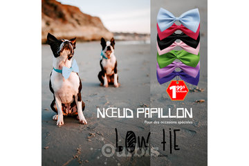 Peppy Collection Club in Montreal: Bow-Tie