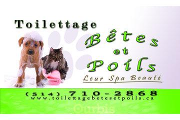Toilettage Bêtes et Poils