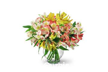 Flower Shop Reg'd