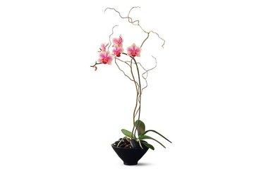 Petals Plus Florist