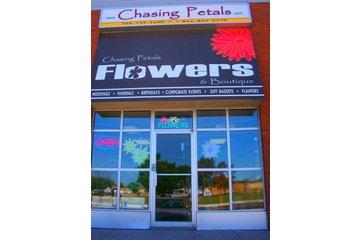 Chasing Petals Flowers