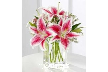 Flower Creations in Mississauga: Mississauga Florist