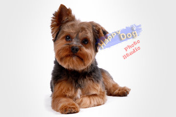 Happy Dog Grooming Salon à Scarborough: Happy Dog Photo Studio