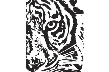 Tiger Lines Parking Lot & Line Painting