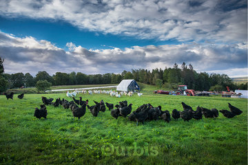 Good Spring Farm in Keswick Ridge