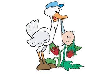 Storks & Berries