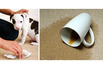 AlbertaPro Cleaning in Calgary: Pet Urine specialists: deep extraction & disinfecting of pet issues
