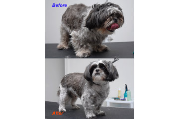 Happy Dog Grooming Salon in Scarborough: Before & After