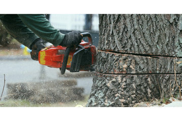 GTA Tree Removal in Ontario