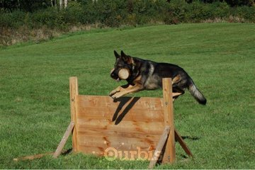 Shield K9 Dog Training in Cambridge: Dog Training Milton