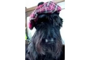 Highland Lassie Dog Walking and Sitting Service in Delta: Highland Lassie