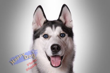 Happy Dog Grooming Salon in Scarborough: Happy Dog Photo Studio
