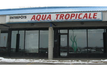 Aqua Tropicale